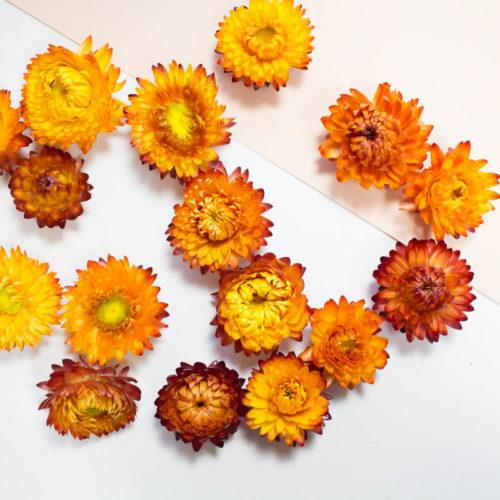 Pause moderne - Fourniture DIY Fleurs séchées