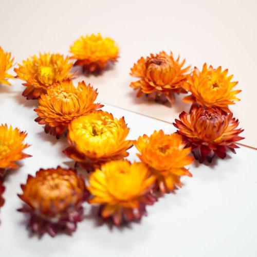 10 Fleurs séchées orange