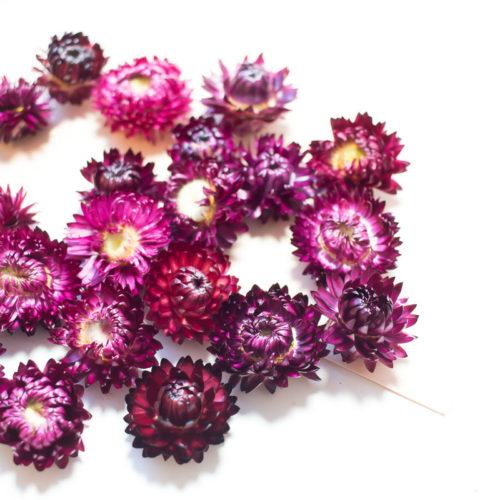 10 Fleurs séchées couleur pourpre