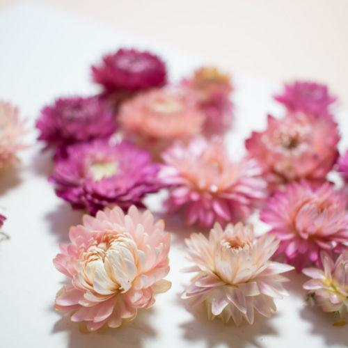 10 Fleurs séchées couleur rose