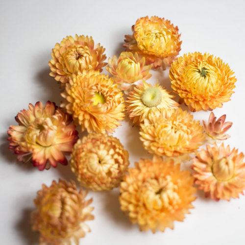 10 Fleurs séchées couleur saumon