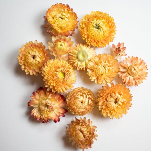 fleurs séchée pause moderne