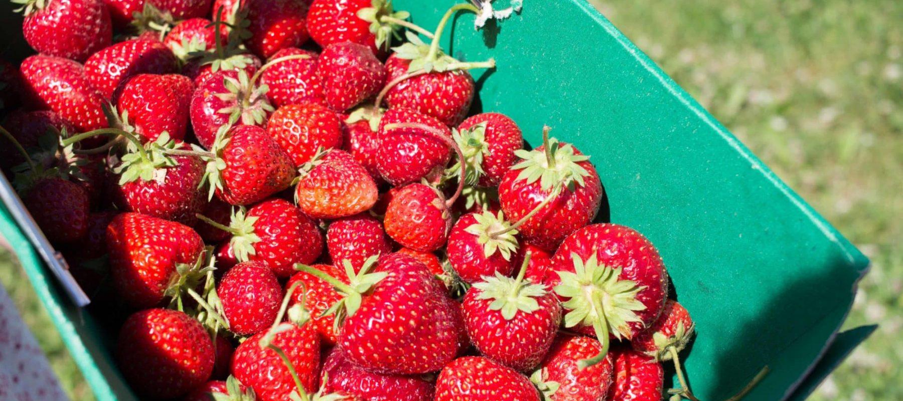Pause Moderne -Box creative et gourmande Article blog -Des fraises en hiver